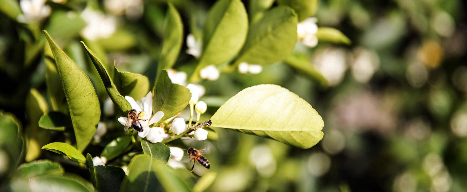vito-giambo-piante-produzione