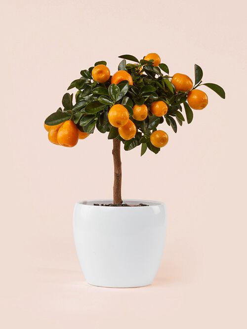 giambo-vito-vivaio-piante-agrumi.jpg